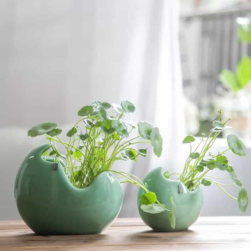 Petites plantes :