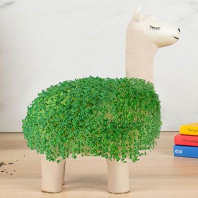Lama à faire pousser