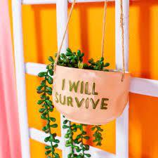 cache pot à suspendre-I will survive